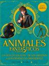 ANIMALES FANTASTICOS LOS CRIMENES DE GRINDELWALD GUIA DE LOS FILMS